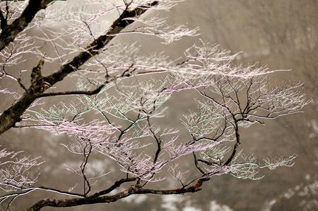 7573448zzr氷の枝.jpg